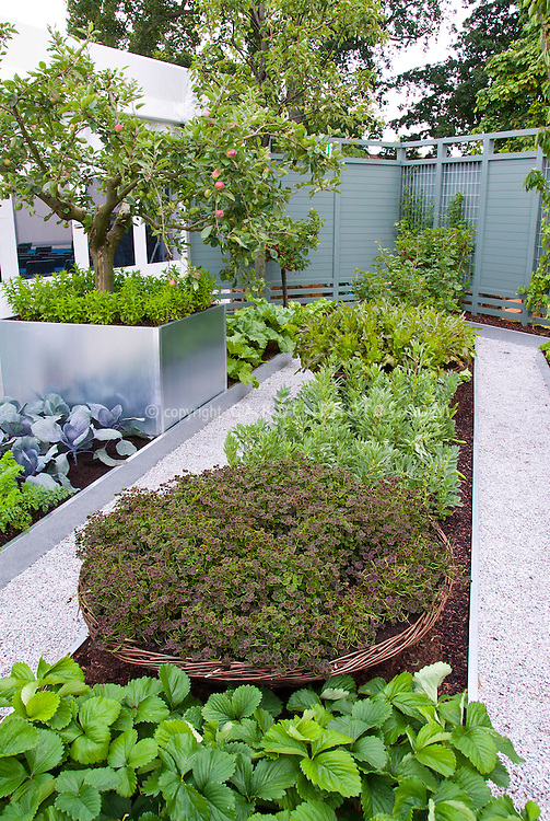 Vegetable garden with carrots, strawberries, cabbage, apple fruit trees, squash, beans, lettuce, etc in raised beds, Trifolium in pot, modern galvanized raised beds, clean white pebble stone pathways, privacy fencing in blue