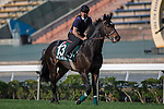 SHA TIN,HONG KONG-DECEMBER 09: Silverwave,trained by Pascal Bary,exercises in preparation for the Hong Kong Vase at Sha Tin Racecourse on December 9,2016 in Sha Tin,New Territories,Hong Kong (Photo by Kaz Ishida/Eclipse Sportswire/Getty Images)