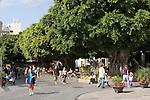 Spain, Canary Islands, La Palma, Los Llanos de Aridane: Calle Real former Calle General Franco), pedestrian area with old Bay trees