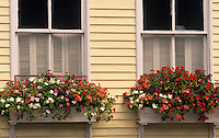 windowbox with flowers