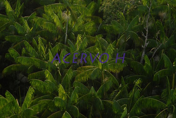 O dia amanhece na região das ilhas em frente a cidade de Belém, neste momento se inicia mais uma prossissão em homenagem a Nossa Senhora de Nazaré.<br /> Belém, Pará, Brasil.<br /> Foto Paulo Santos<br /> 12/10/2008