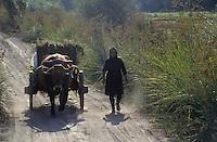 Europe/Portugal/Montemor : Attelage et scène de vie rurale