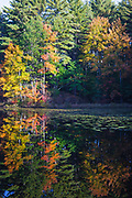 Lake Massabesic watershed in Auburn, New Hampshire during the autumn months.