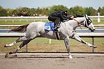 #63Fasig-Tipton Florida Sale,Under Tack Show. Palm Meadows Florida 03-23-2012