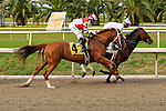 January 16, 2016: Coup de Grace with Florent Geroux up in turn one during the Louisiana Stakes race at the Fairgrounds race course in New Orleans Louisiana. Steve Dalmado/ESW/CSM