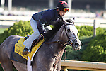 Paddy O'Prado works at Churchill Downs in preparation for The Kentucky Derby. 04.29.2010
