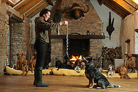 FAO JANET TOMLINSON, DAILY MAIL PICTURE DESK<br />Pictured: A member of staff trains one of the dogs Monday 14 November 2016<br />Re: The Dog House in the village of Talog, Carmarthenshire, Wales, UK