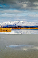 Reflection in pond with ice. Lower Klamath Lake National Wildlife Refuge, California