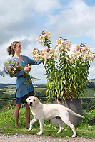 BNPS.co.uk (01202 558833)<br /> Picture: ZacharyCulpin/BNPS<br /> <br /> Horse and flower power...<br /> <br /> Kate White-Hamilton cuts huge Tree Lilies at her flower plot in West Chelborough in Dorset in preparation for the Flower Farmers' Big Weekend as Benson the golden retriever puppy looks on<br /> <br /> Flower farmers across the UK invited the public onto their plots for the third successive year of the Flower Farmers' Big Weekend. The weekendoffered flower-lovers the chance to meet and learn from the local, growers of seasonal, scented British cut flowers on their allotments, cutting gardens, walled gardens and farmland. Thenationwide open flower farm festival staged by growers' association.