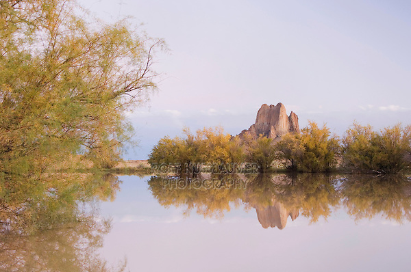 Rocks reflecting in pond with Salt Cedars at dusk,Shiprock, Navajo Indian Reserve, New Mexico, USA, September 2006