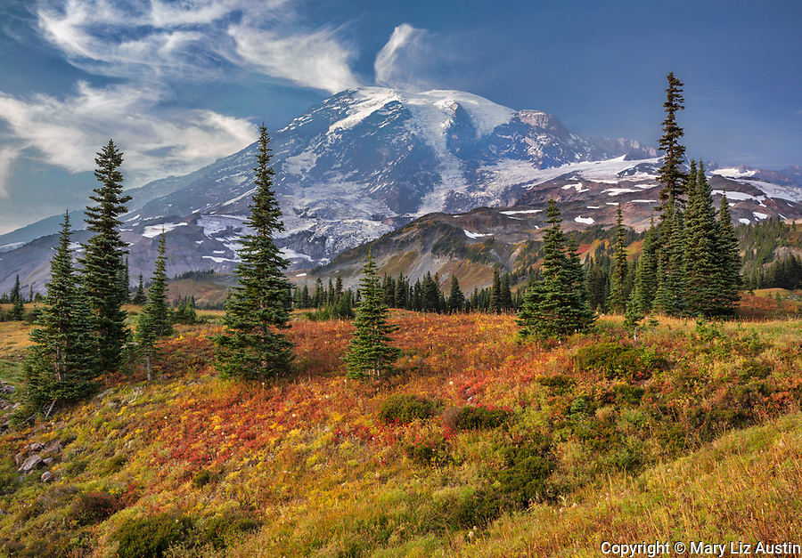 Mount Rainier National Park, WA: Autumn colors in the high alpine meadows with Mount Rainier in the distance