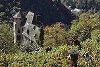 Europe/France/Auvergne/12/Aveyron/Conques: Vendanges et le Château d'Humières (XVIème) <br /> PHOTO D'ARCHIVES // ARCHIVAL IMAGES<br /> FRANCE 1980