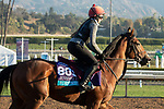 ARCADIA, CA  OCTOBER 31. Breeders' Cup Juvenile Turf entrant Fort Myers, trained by Aidan P. O'Brien,    exercises in preparation for the Breeders' Cup World Championships at Santa Anita Park in Arcadia, California on October 31, 2019.  (Photo by Casey Phillips/Eclipse Sportswire/CSM)
