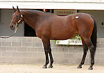 10  November  2009 Keeneland November Sale.   Hip #316 Surfside, consigned by Eaton sales, part of the Overbrook Farm dispersal.  Multiple Graded stakes earner of over $1,800,000, Champion Surfside is in foal to Giant's Causeway.