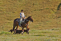 Farm hand with 3 dogs riding her horse through a field