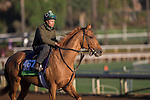 OCT 29 2014:Seek Again, trained by William I. Mott, exercises in preparation for the Breeders' Cup Mile at Santa Anita Race Course in Arcadia, California on October 29, 2014. Kazushi Ishida/ESW/CSM