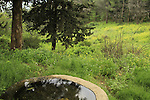 Ein Roím in Naftali Mountains Forest
