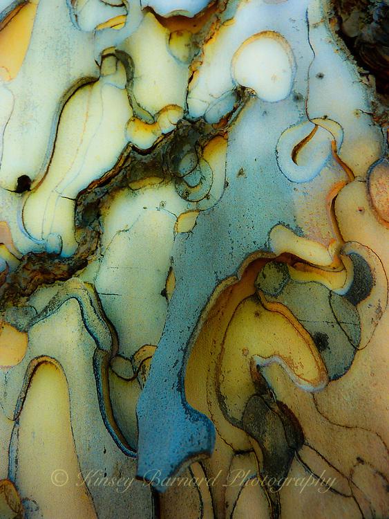 """PONDEROSA PUZZLE""<br /> <br /> <br /> Beautiful, natural designs in Ponderosa bark"