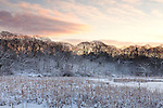 Fresh snow  at the Eastern Point Wildlife Sanctuary in Gloucester, MA, USA