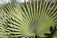 Cuba, im Jardin Botanico bei Cienfuegos