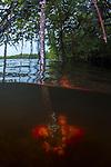 Split shot mangrove