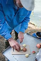 Ed Bennett chops up potatoes at a camp along the Kenai River.