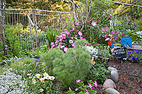 Whimsical rooster folk art in California organic garden with vegetables and flowers; MUST CREDIT: Elvin Bishop Garden