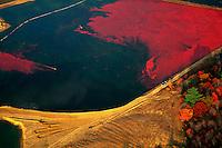 Aerial landscape of a cranberry bog at harvest time. Caver, Massachusetts.