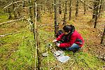 Scottish Wildcat (Felis silvestris grampia) biologist, Kerry Kilshaw, setting up camera trap in coniferous forest, Scotland, United Kingdom