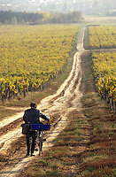 Europe/Hongrie/Tokay/Env Sarospatak: Les vignes du château Megyer - Vendanegur regagnant son foyer