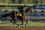 ARCADIA, CA  OCTOBER 26: Breeders' Cup Distaff entrant Elate, trained by William I. Mott, exercises in preparation for the Breeders' Cup World Championships at Santa Anita Park in Arcadia, California on October 26, 2019. (Photo by Casey Phillips/Eclipse Sportswire/CSM)