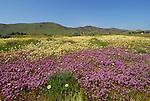 San Luis Obispo County, CA