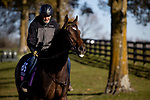November 4, 2020: Campanelle, trained by trainer Wesley A. Ward, exercises in preparation for the Breeders' Cup Juvenile Fillies Turf at Keeneland Racetrack in Lexington, Kentucky on November 4, 2020. Alex Evers/Eclipse Sportswire/Breeders Cup