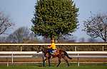 November 3, 2020: One Master, trained by trainer William John Haggas, exercises in preparation for the Breeders' Cup Mile at Keeneland Racetrack in Lexington, Kentucky on November 3, 2020. Alex Evers/Eclipse Sportswire/Breeders Cup