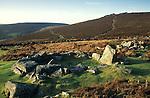 Grimspound, Dartmoor. Nr Widecombe in the  Moor. Devon,