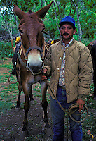 A guide stands by his mule before leading tourists down the switchback trail to the Kalaupapa settlement, Island of Molokai