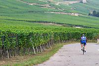 cyclist vineyard kientzheim alsace france