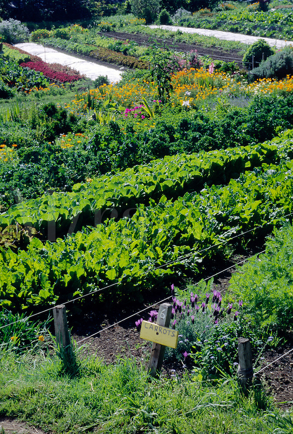 Organic vegetable garden with chives, carrots, chard, lettuce and more - Esalen Institute - Big Sur, California
