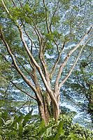 Tree abstract near Manoa Falls, Honolulu.  <br /> <br /> Canon EOS 5D, 24-105L lens