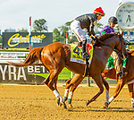 JULY 04, 2021: Top Seed in post parade for John A. Nerud Stakes, going 7 furlongs, at Belmont Park in Elmont, New York. Sue Kawczynski/Eclipse Sportswire/CSM