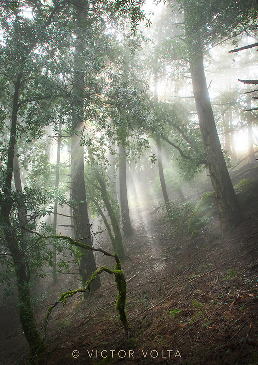 Forest and Fog between storms