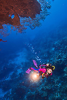 26 July 2015: SCUBA Diver Sally Herschorn explores the pinnacle at Ghost Mountain, on the North side of Grand Cayman Island. Located in the British West Indies in the Caribbean, the Cayman Islands are renowned for excellent scuba diving, snorkeling, beaches and banking.  Mandatory Credit: Ed Wolfstein Photo *** RAW (NEF) Image File Available ***