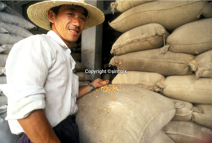Farmer shows the grain corp, Guangzhou, China.
