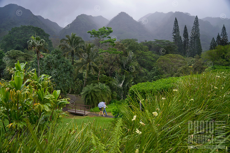 A couple with an umbrella walks on a path through Lyon Arboretum in Manoa Valley, O'ahu.
