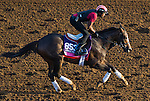 October 27, 2014:  Conquest Harlanate, trained by Mark Casse, exercises in preparation for the Breeders' Cup Juvenile Fillies Turf at Santa Anita Race Course in Arcadia, California on October 27, 2014. John Voorhees/ESW/CSM