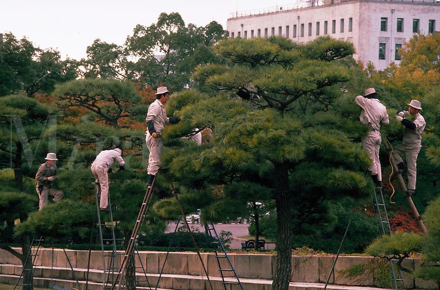 Japanese workers prune trees on the grounds of Osaka Castle. Osaka, Japan.