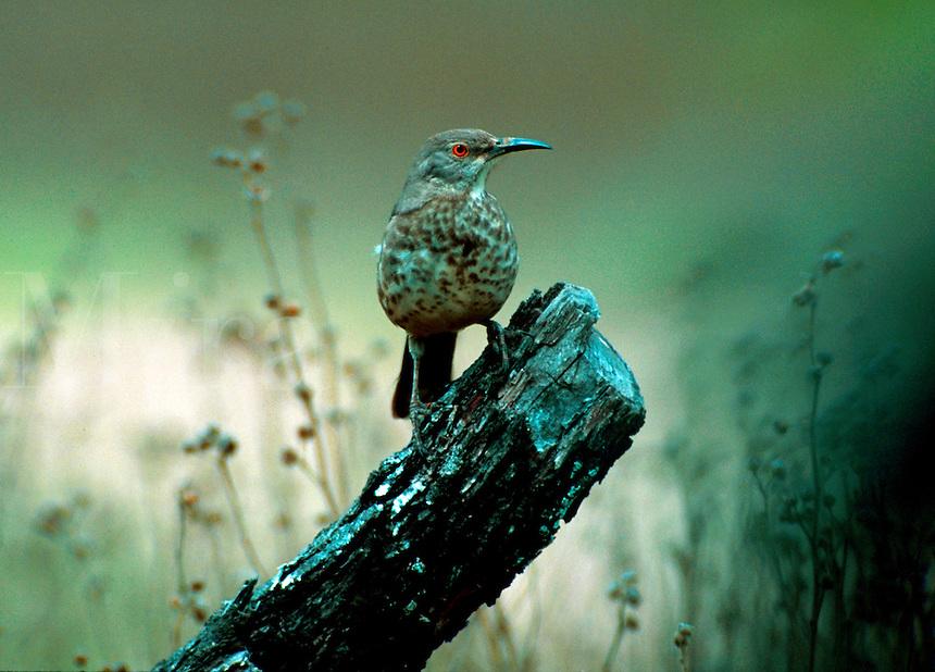 Bird perched on a tree stump.