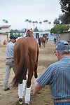 DEL MAR,CA-AUGUST 21: California Chrome is going to the trailer at Del Mar Race Track on August 21,2016 in Del Mar,California (Photo by Kaz Ishida/Eclipse Sportswire/Getty Images)