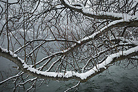 Switzerland. Canton Graubünden. Davos. Winter season Snowstorm on the forest and the lake. Tree's branches covered with snow. Lake Davos (German: Davosersee) is a small natural lake. Its surface area is 0.59 km² and the maximum depth is 54 m. Fed by sources of the Rhine, Flüelabach and Totalpbach, among other mountain creeks, the lake is used as a hydropower reservoir. Davos is an Alpine town, and a municipality in the Prättigau/Davos Region in the canton of Graubünden. 25.10.2020 © 2020 Didier Ruef