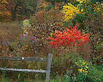 Devil's Lake State Park, WI<br /> Fall colors of staghorn sumac and blooming asters and rudbeckia brighten the tallgrass prairie with weathered wooden fence